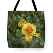 Yellow And Orange Poppy Tote Bag