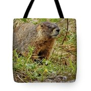 Yellow-bellied Marmot Tote Bag