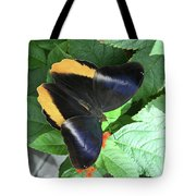 Yellow-edged Giant Owl Butterfly #6 Tote Bag