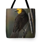 Yellow Headed Blackbird On Cattails Tote Bag