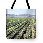 Young Broccoli Field For Seed Production Tote Bag