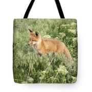 Young Red Tailed Fox Tote Bag