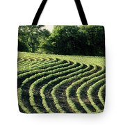 Young Soybean Plants Tote Bag