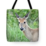 Young White-tailed Buck In Velvet Tote Bag