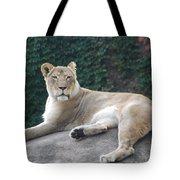 Zoo Lion Tote Bag