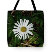 10-15-16--4996 Montauk Daisy Don't Drop The Crystal Ball Tote Bag