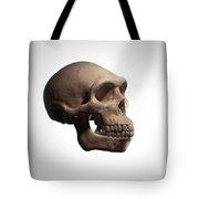 Homo Erectus Tote Bag