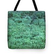 100134 Uluhe Ferns Hawaii Tote Bag