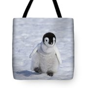 Emperor Penguin Chick Tote Bag