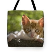 Kitten On A Wall Tote Bag