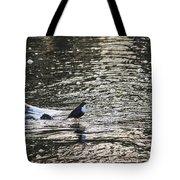 White-throated Dipper Tote Bag
