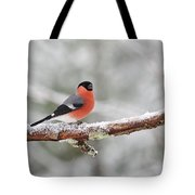 Eurasian Bullfinch In Winter Tote Bag