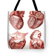 Heart, Anatomical Illustration, 1814 Tote Bag