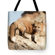 Red Tailed Fox Tote Bag