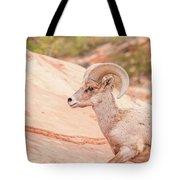 Desert Bighorn Ram Tote Bag