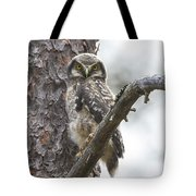 Hawk Owl Tote Bag