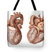 Heart, Anatomical Illustration, 1814 Tote Bag
