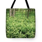 146112 Ferns In Pisgah Nat Forest V Tote Bag