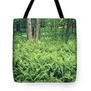146113 Frens In Pisgah Nat Forest H Tote Bag