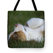 Australian Shepherd Puppy Tote Bag