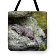 150501p133 Tote Bag