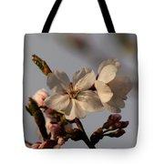 Black Cherry Tree  Tote Bag