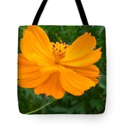 Australia - Yellow Flowers Of The Cosmos Carpet Tote Bag