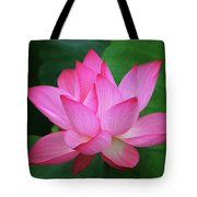 Blossoming Lotus Flower Closeup Tote Bag