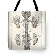 The Science Of Human Anatomy Tote Bag