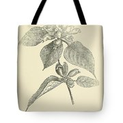 Vintage Botanical Illustration Tote Bag