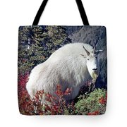 1m4900 Mountain Goat Near Mt. St. Helens Tote Bag