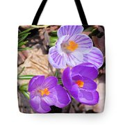 1st Flower In Garden 2010 Photo Tote Bag