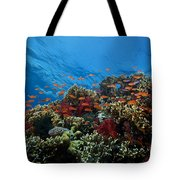 A School Of Orange Basslets Tote Bag by Terry Moore