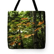 A Touch Of Autumn Tote Bag