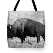 American Bison Buffalo Bull Feeding On Dry Fall Grass Tote Bag