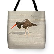 American Oystercatcher, Haematopus Palliatus,  Looking For Food  Tote Bag