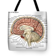 Anatomy Of The Brain, Illustration Tote Bag