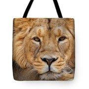 Angolian Lion Tote Bag