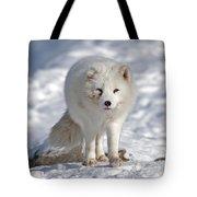 Arctic Fox... Tote Bag