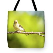 Baby Sparrow Tote Bag