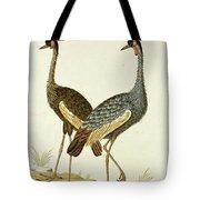 Balearica Regulorum Grey Crowned Crane, Robert Jacob Gordon, 1777 - 1786 Tote Bag