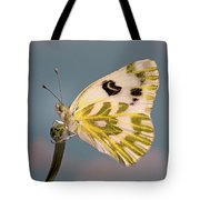 Becker's White Butterfly Tote Bag