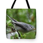 Blue-gray Gnatcatcher Tote Bag