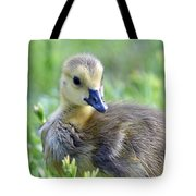 Canadian Goose Chick Tote Bag