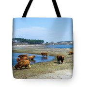 Cattle Scottish Highlanders, Zuid Kennemerland, Netherlands Tote Bag