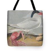 Cayenne Tern Tote Bag