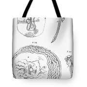 Chick Embryology, Malpighi, 1687 Tote Bag