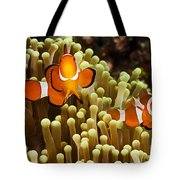 Clown Anemonefish Tote Bag