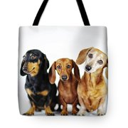 Dachshund Pack  Tote Bag