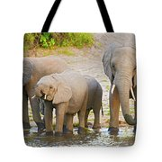 Elephants At The Bank Of Chobe River In Botswana Tote Bag